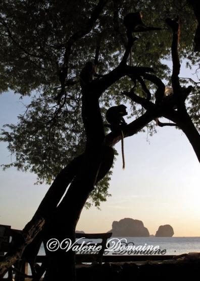 V.Domaine - Thailande